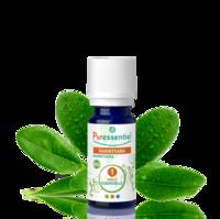 Puressentiel Huiles Essentielles - Hebbd Ravintsara Bio* - 5 Ml à TARBES